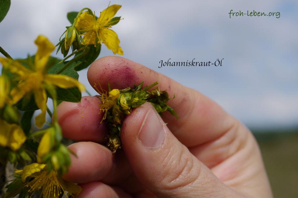 Johanniskrautoel froh-leben