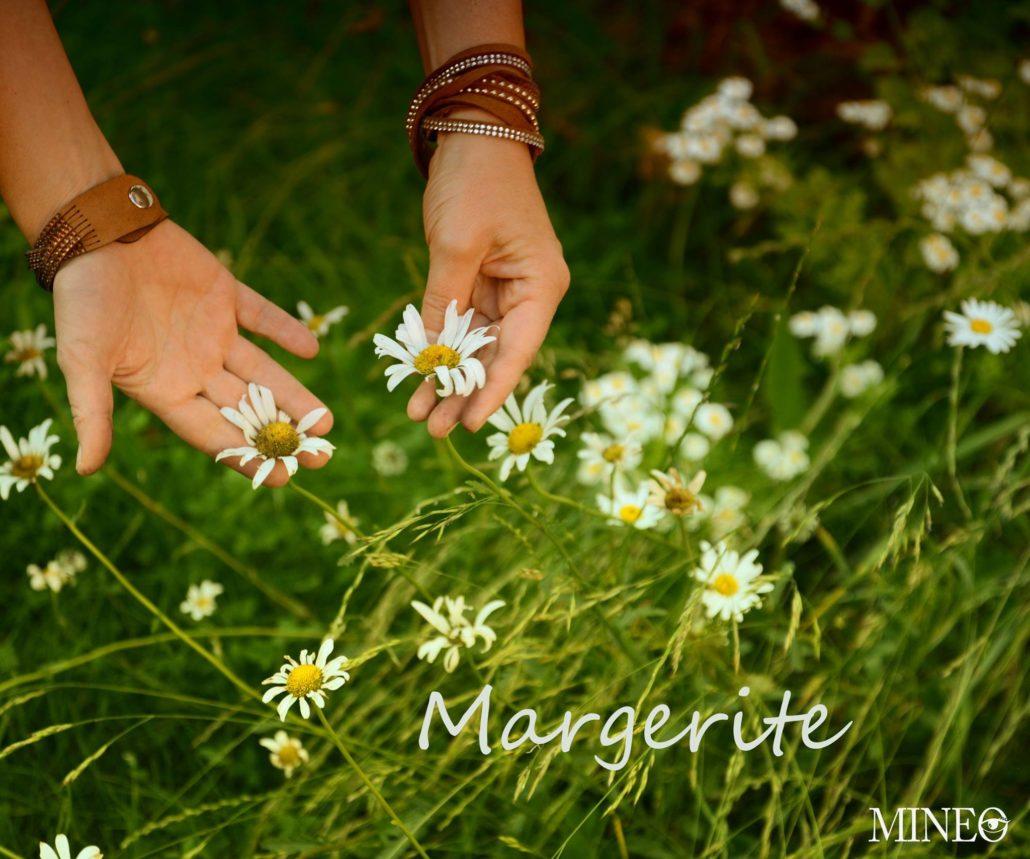 Kraeuterwanderung Essbare Wildkraeuter Margerite Mineo froh-leben