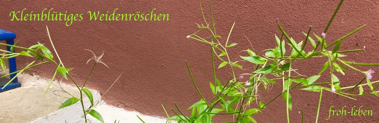 Kleinbluetiges Weidenroeschen bei Prostatabeschwerden froh-leben