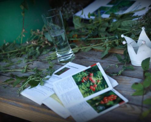 Kraeuterwanderung HomeDeko froh leben Ipanema