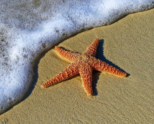 Psychologische Handanalyse und gute Geschichten_ Seesterne retten